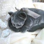 """Подушка-игрушка """"Спящая кошка"""" своими руками (+ выкройка)"""
