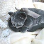 Подушка-игрушка «Спящая кошка» своими руками (+ выкройка)